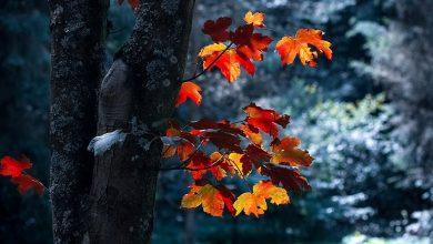 Photo of Seasons vocabulary – Évszakok szókincs