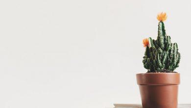 Photo of Present Simple – Egyszerű feladat az egyszerű jelennel
