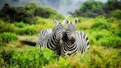 Photo of Animals Odd One Out – Állatos szókincs
