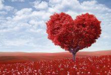 Valentin nap angol olvasmány