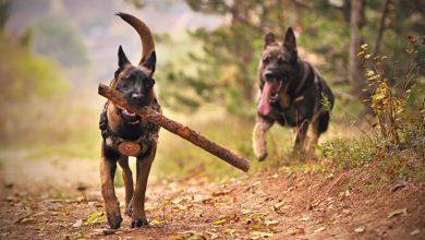 Photo of Dogs – Névelők gyakorlás